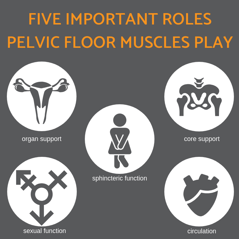 Five important roles pelvic floor muscles play pelvic floor physiotherapy infographic