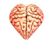 The effects of TBI on heart health Propel Physiotherapy